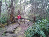 20130225_150622_Alakai_swamp_trail