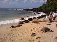 20130301_155300_turtle_beach_sleeping