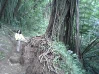 20130304_094009_Manoa_Falls_trail