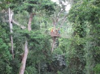 3488-Kakum_canopy_walk_2